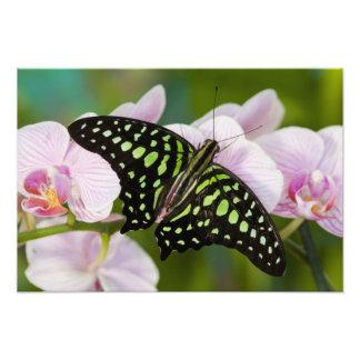 Sammamish, Washington. Tropical Butterflies 50 Photo Print