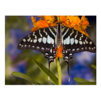 Sammamish, Washington. Tropical Butterflies 50 Postcard