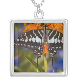 Sammamish, Washington. Tropical Butterflies 50 Square Pendant Necklace