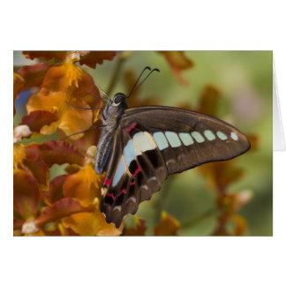 Sammamish, Washington. Tropical Butterflies 51 Card