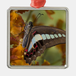 Sammamish, Washington. Tropical Butterflies 51 Christmas Ornament