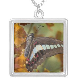Sammamish, Washington. Tropical Butterflies 51 Square Pendant Necklace