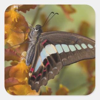 Sammamish, Washington. Tropical Butterflies 51 Square Sticker