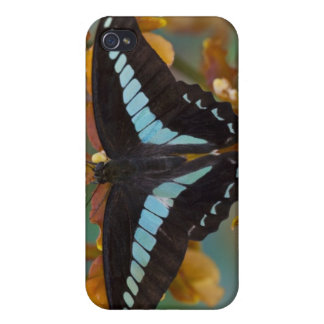 Sammamish, Washington. Tropical Butterflies 52 Cases For iPhone 4
