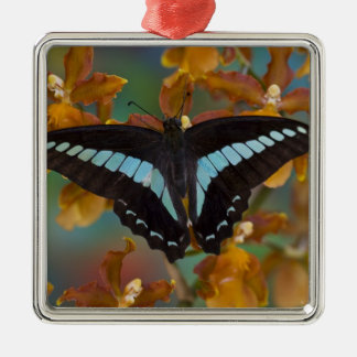 Sammamish, Washington. Tropical Butterflies 52 Christmas Ornament
