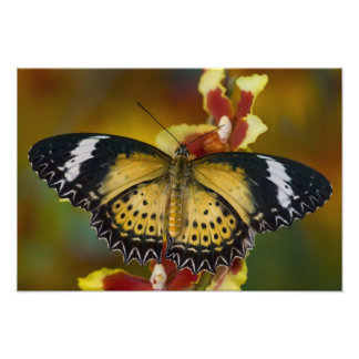 Sammamish, Washington. Tropical Butterflies 52 Photo Print