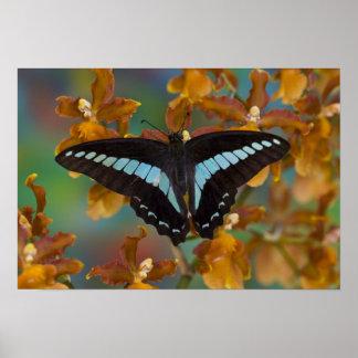 Sammamish, Washington. Tropical Butterflies 52 Poster