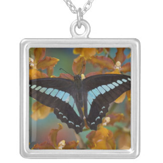 Sammamish, Washington. Tropical Butterflies 52 Silver Plated Necklace