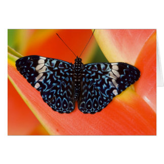 Sammamish, Washington. Tropical Butterflies 53 Card