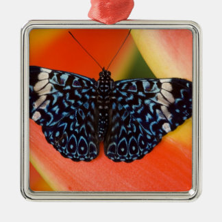 Sammamish, Washington. Tropical Butterflies 53 Christmas Ornament