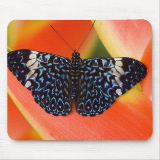 Sammamish, Washington. Tropical Butterflies 53 Mouse Mat