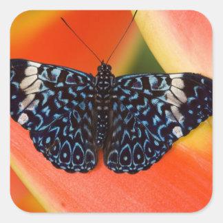 Sammamish, Washington. Tropical Butterflies 53 Square Sticker