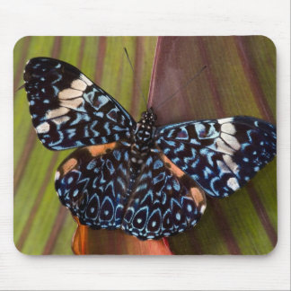 Sammamish, Washington. Tropical Butterflies 54 Mouse Mat