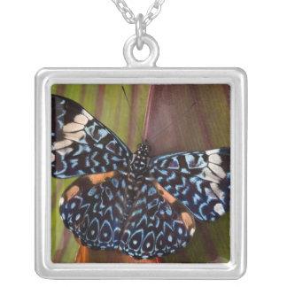 Sammamish, Washington. Tropical Butterflies 54 Square Pendant Necklace