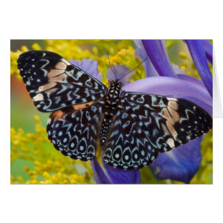 Sammamish, Washington. Tropical Butterflies 55 Card