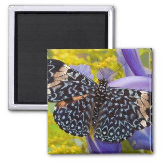 Sammamish, Washington. Tropical Butterflies 55 Magnet
