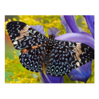 Sammamish, Washington. Tropical Butterflies 55 Postcard