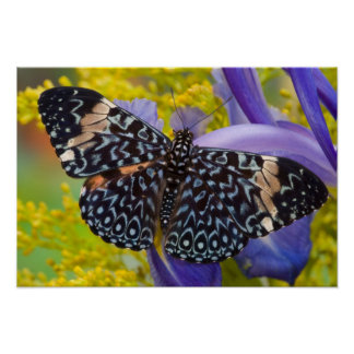 Sammamish, Washington. Tropical Butterflies 55 Poster
