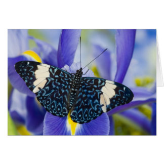 Sammamish, Washington. Tropical Butterflies 56 Card