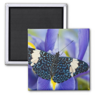 Sammamish, Washington. Tropical Butterflies 56 Square Magnet