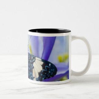 Sammamish, Washington. Tropical Butterflies 56 Two-Tone Coffee Mug