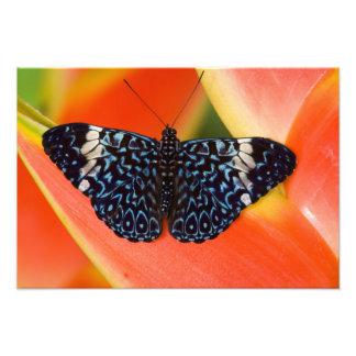 Sammamish, Washington. Tropical Butterflies 57 Photo Print