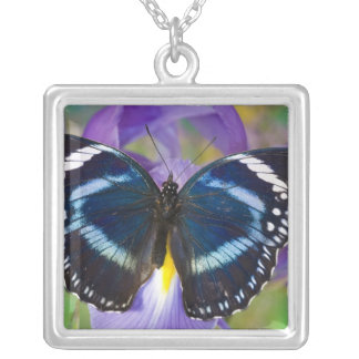Sammamish, Washington. Tropical Butterflies 57 Silver Plated Necklace