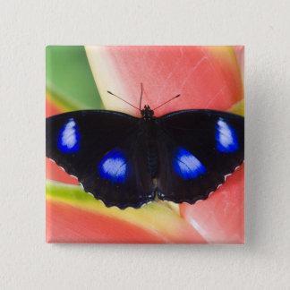 Sammamish, Washington. Tropical Butterflies 58 15 Cm Square Badge