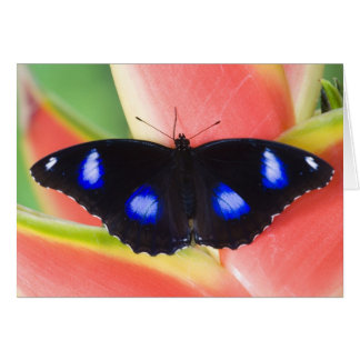 Sammamish, Washington. Tropical Butterflies 58 Card