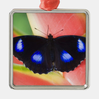 Sammamish, Washington. Tropical Butterflies 58 Christmas Ornament