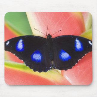 Sammamish, Washington. Tropical Butterflies 58 Mouse Mat