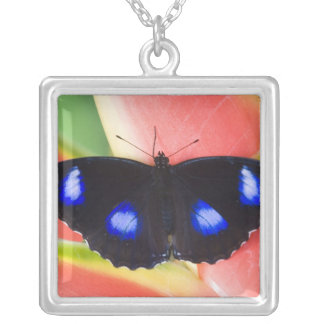 Sammamish, Washington. Tropical Butterflies 58 Silver Plated Necklace