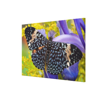 Sammamish, Washington. Tropical Butterflies 59 Canvas Print