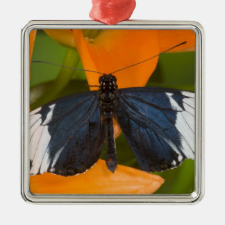 Sammamish, Washington. Tropical Butterflies 59 Christmas Ornament