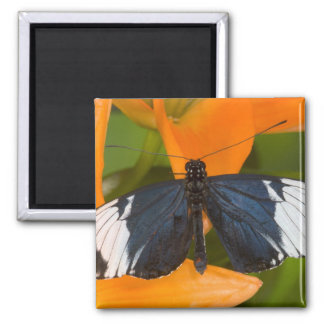 Sammamish, Washington. Tropical Butterflies 59 Magnet