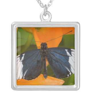 Sammamish, Washington. Tropical Butterflies 59 Square Pendant Necklace