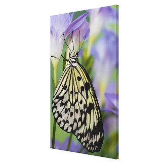 Sammamish, Washington. Tropical Butterflies 5 Canvas Print