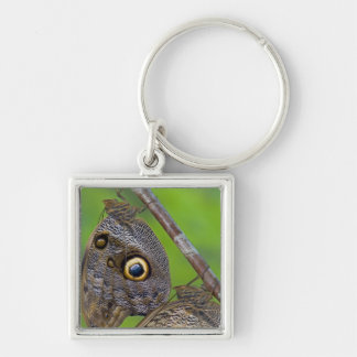 Sammamish, Washington. Tropical Butterflies 5 Key Ring