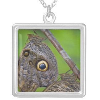 Sammamish, Washington. Tropical Butterflies 5 Personalized Necklace