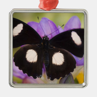 Sammamish, Washington. Tropical Butterflies 60 Christmas Ornament