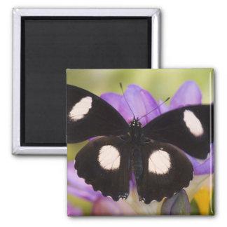 Sammamish, Washington. Tropical Butterflies 60 Magnet