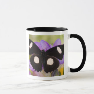 Sammamish, Washington. Tropical Butterflies 60 Mug