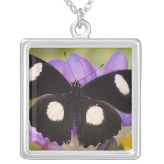 Sammamish, Washington. Tropical Butterflies 60 Square Pendant Necklace