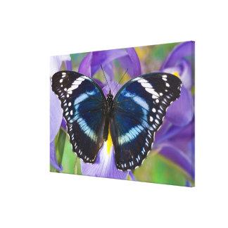 Sammamish, Washington. Tropical Butterflies 61 Canvas Print