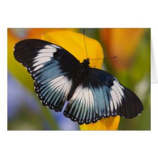 Sammamish, Washington. Tropical Butterflies 61 Card