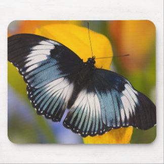 Sammamish, Washington. Tropical Butterflies 61 Mouse Mat
