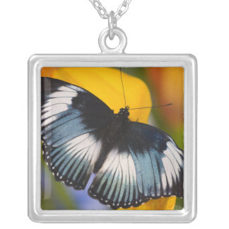 Sammamish, Washington. Tropical Butterflies 61 Silver Plated Necklace