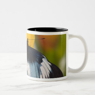 Sammamish, Washington. Tropical Butterflies 61 Two-Tone Coffee Mug