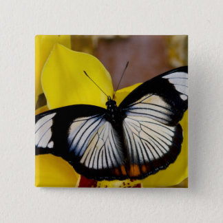 Sammamish, Washington. Tropical Butterflies 62 15 Cm Square Badge