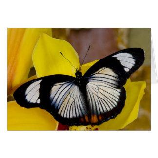 Sammamish, Washington. Tropical Butterflies 62 Card